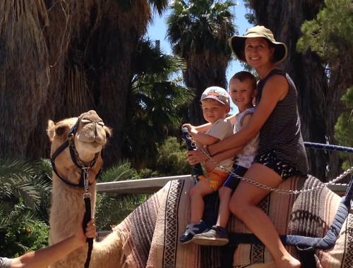 phoenix-zoo-camel-rides